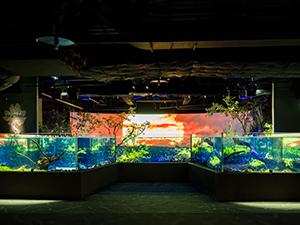 カワスイ 川崎水族館(ホテルから徒歩約5分)